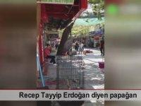 Recep Tayyip Erdoğan Diyen Papağan