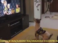 Fenerbahçe Maçlarını Kaçırmayan Fanatik Köpek