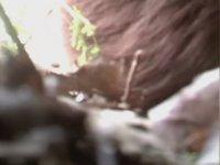 ABD'de Kameralarda Görüntülelen Yaratık