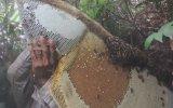Doğal Bal Nedir Nasıl Toplanır