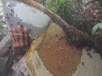 Doğal Bal Nedir? Nasıl Toplanır?
