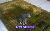 Kediyle Namaz Kılmayı Öğrenmek
