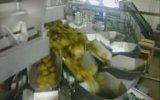 Salatalık Turşusu Paketleme
