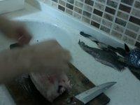 Böbrek Taşı Düşüren Eşkina Balığı
