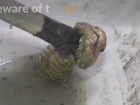 Tuvaletten Kobra Çıkması