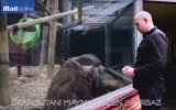 Orangutanı Maymun Eden Sihirbaz