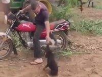 Motorcu Maymun