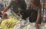 Ölüm Döşeğindeki Gence Köpeğinin Veda Etmesi