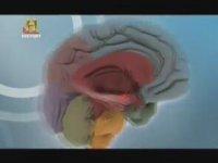 Amigdala ve Hipokampus'un Beyindeki Rolü