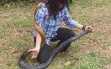 Dev Yılanı Yakalayan Kadın