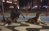 Klarnetin Sesiyle Efkarlanan Köpek