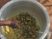 Hindistan Usulü Balık