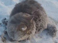 -35 Derece Soğukta Ayakları Donan Kedi