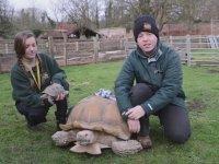 Fazla Çiftleşmekten Sakat Kalan Afrika Kaplumbağası