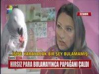 Para Bulamayınca Papağanı Çalan Hırsız