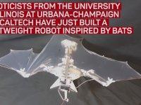 Dünyanın İlk Yarasa Robotu - Bat Bot