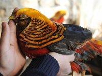 İnşaat İşçisinin Kuş Koleksiyonu