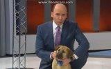 Kuyu Köpeğin Atv Haber'e Konuk Olması