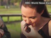 Angelina Jolie'nin Aşırı Midesiz ve Geniş Olması