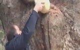300 Yıllık Çınar Ağacının Gövdesini Oymak