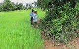 Kamboçyalı Eltilerin Balık Tutma Macerası