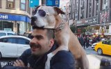 Kendini İnsan Sanan Köpek