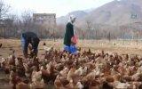 Atanamayan Öğretmenin Tavuk Çiftçisi Olması