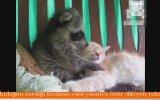 Kedinin Kulağını Isırıp Özür Dileyen Rakun