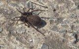 Örümceği Zombiye Çeviren Yaban Arısı