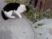 Kavanoza Sıkışan Kediyi Kurtarmak