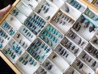 60 Yılda 10 Milyon Dolarlık Böcek Koleksiyonu!