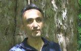 Zonguldak'taki 4112 Yaşındaki Porsuk Ağacı