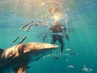 Köpek Balıkları İle Dünyanın En Tehlikeli Galaxy S8 Kutu Açılışı!