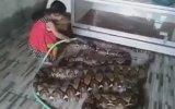 Hortumla Boa Yılanı Yıkayan Mink Kız