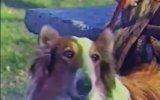 Köpeğe Dublaj Yapılan Türk Filmi