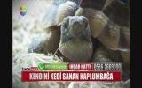 Kendini Kedi Sanan Kaplumbağa