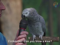Einstein Zekasına Sahip Afrika Gri Papağanı