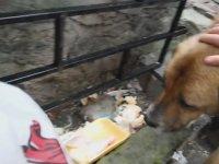 Kasabı İzleyen Köpeğe Et Alan Adam