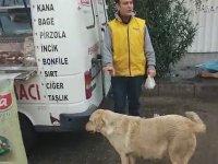 Yavrularına Pakette Tavuk Götüren Anne Köpek