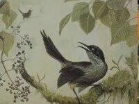 Büyüleyici Sesli Kuş Kauai'nin Elde Kalan Son Ses Kaydı