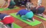 Fitness Trendi  Keçi Yogası