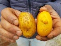 Patatese Benzeyen Yumurta - Sivas