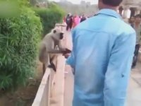 Maymuna Tokat Atan Ruh Hastası Adam