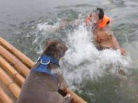 Boğulma Numarası Yapan Sahibini Kurtaran Köpekler