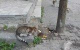 Kedileri Siklemeyen Fare ve Aralıksız Konuşan Adam