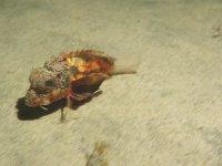 Kumda Acayip Şekilde Yürüyen Balık