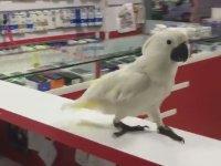 Herkesi Şikayet Eden Papağan