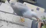 Kuşlar Konmasın Diye Diken Yerleştirmek  Bakırköy