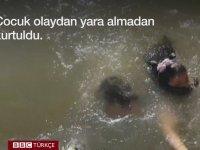Deniz Aslanının Küçük Kızı Suya Çekmesi - BBC Türkçe