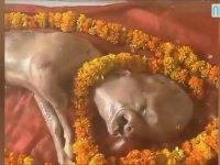 Hindistanlıların Tanrı Olduğuna İnandığı Yaratık